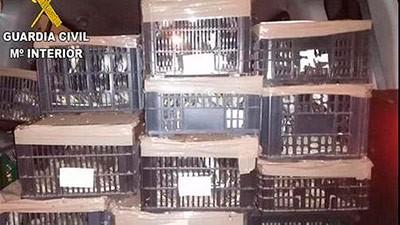 Detenido un gitano en Valencia por llevar 670 pájaros en el maletero del coche